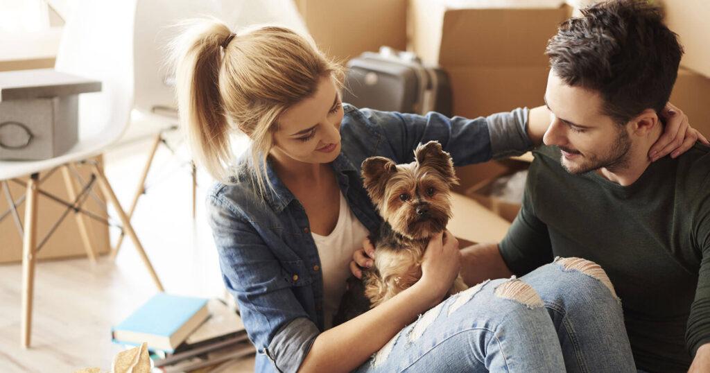 Come fare il trasloco con animali domestici